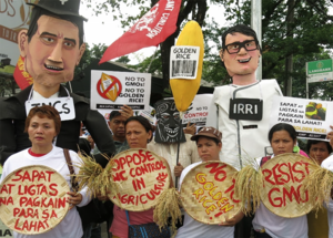 Farmers oppose Golden Rice, seeing as it will not benefit consumers and producers, but merely as a profit-making venture for giant agrochemical corporations.