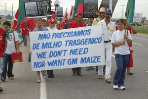 "Brazilian peasants demonstrate against GM maize and ""TERMINATOR"" seeds. These seeds are genetically modified to become sterile after the first germination, forcing peasants to buy new stock each season. (Photo: Douglas Mansur - Curitiba)"