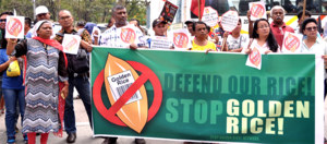 International participants from Asia as well as New Zealand and Australia converged in front of the Department of Agriculture to call on the department to immediately scrap the application for open field test and direct use of Golden Rice in the Philippin