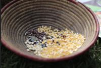Trade deals threaten peasant farmers' stewardship of seed biodiversity-image