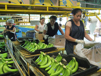 New free trade agreements: normalising the brutality of transnational supply chains -image