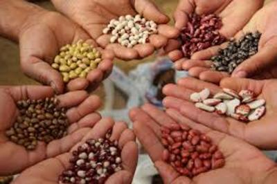Farmer seeds, plants of the future for healthy and sustainable nutrition-image