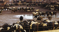Two ways to tackle livestock's contribution to the climate crisis-image