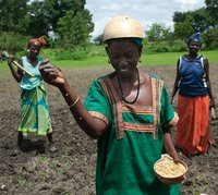 New report shines light on the role of farmers in saving Africa's seed diversity -image