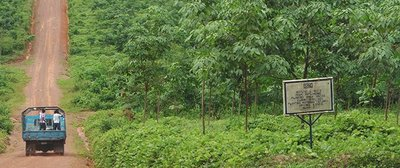 Rubber group ousts farmers in Liberia-image