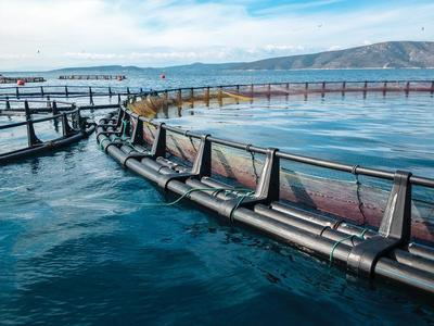 Big ag eyes big aquaculture-image