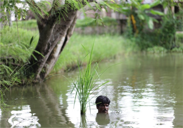 Flood_Tolerent_Rice_from_Basudha.png